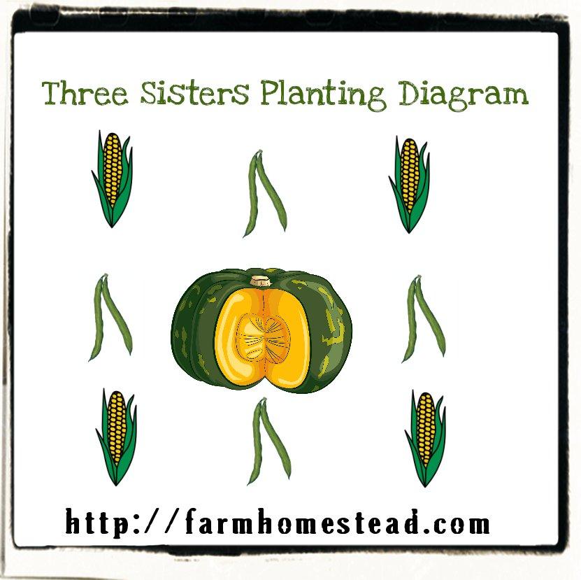 3-sisters-planting-diagram