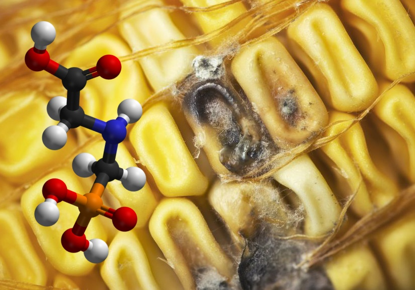 GMO_RNAi_dangers