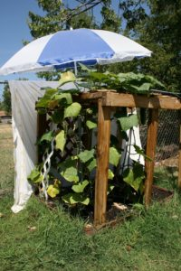 garden shade for summer heat