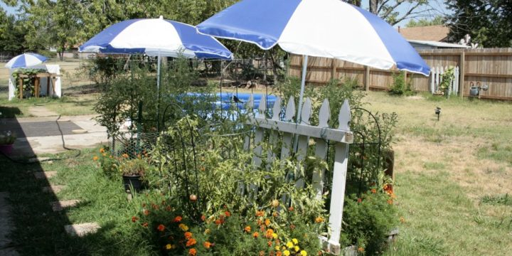 Summer Heat and Organic Gardening