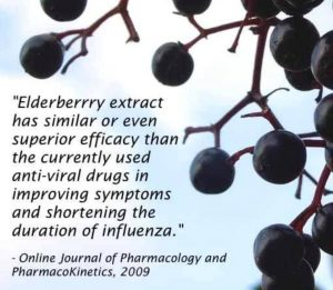 elderberry blocks flu virus