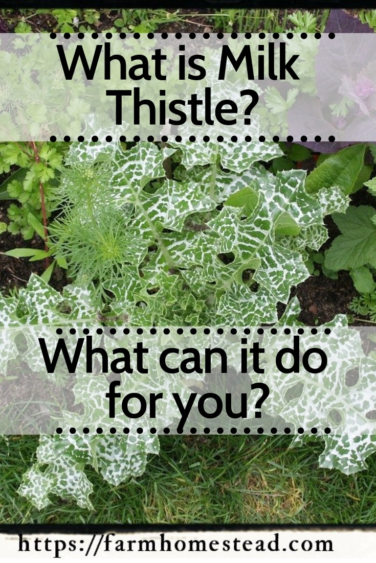 benefits of milk thistle