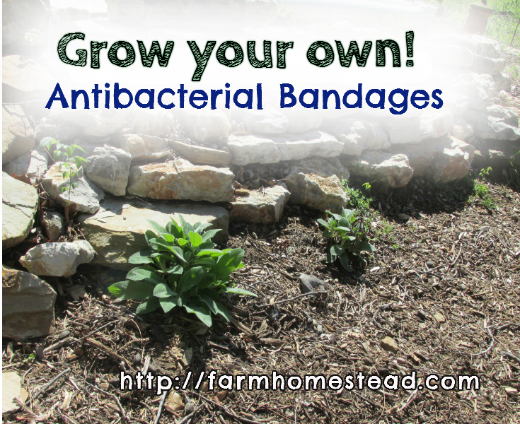 homegrown antibacterial bandage