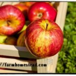 Veggie & Fruit Superfoods to Enjoy in the Fall