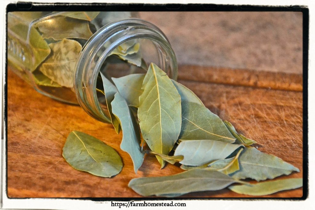 bay leaves in a jar