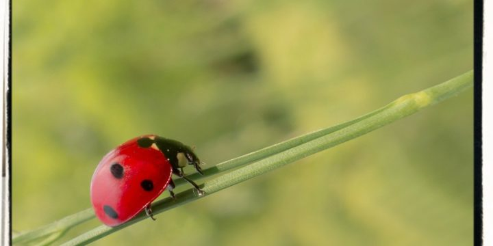 Lure Beneficial Insects to Your Garden