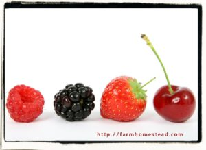 raspberry - blackberry - strawberry - cherry