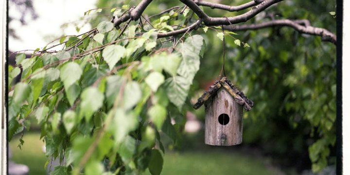 How To Landscape To Attract Birds