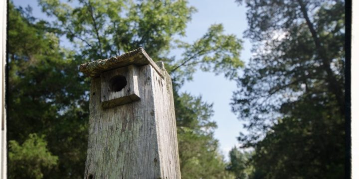 The Bird House – Nature in Your Own Back Yard