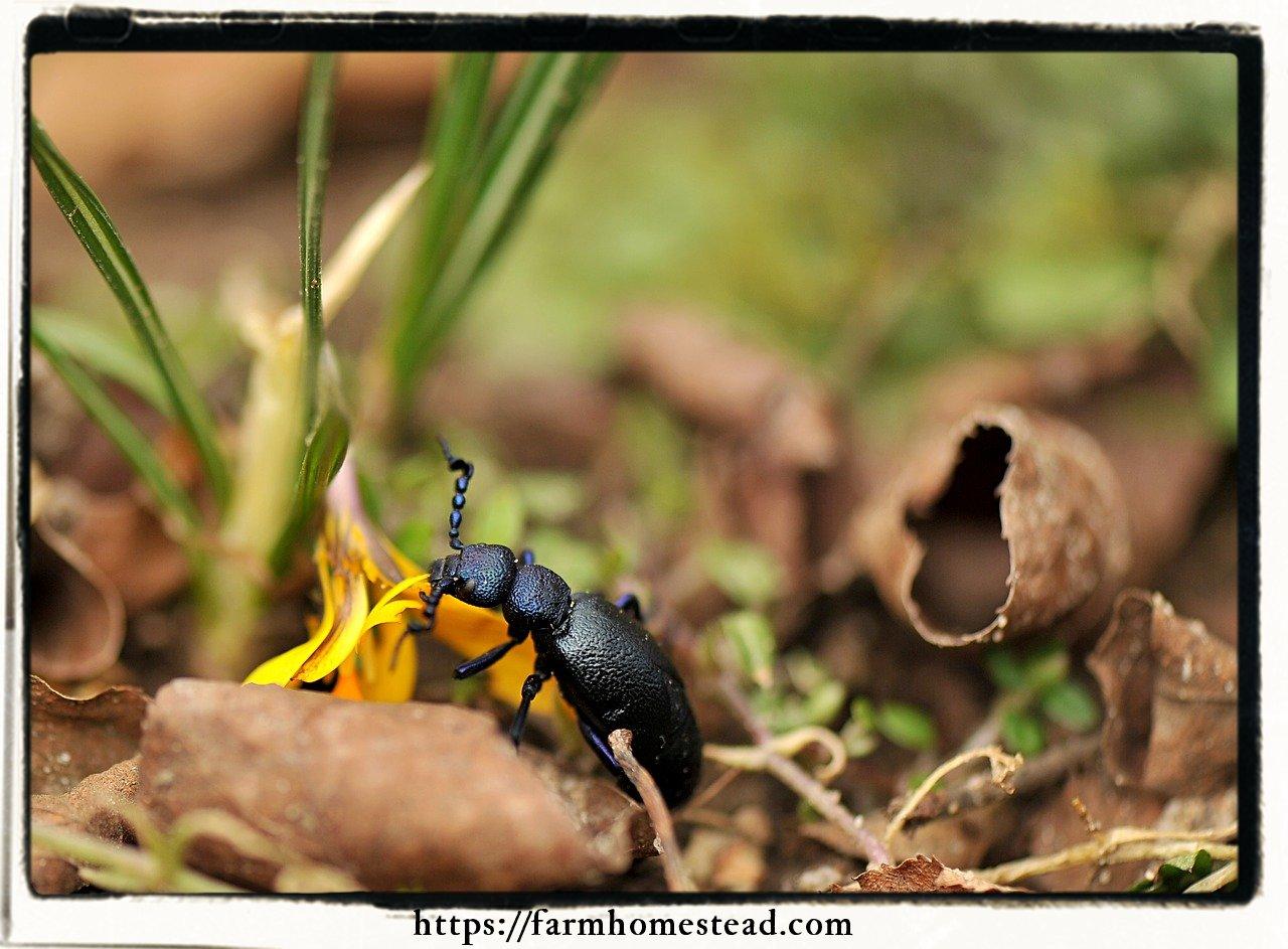 organic gardening and bugs