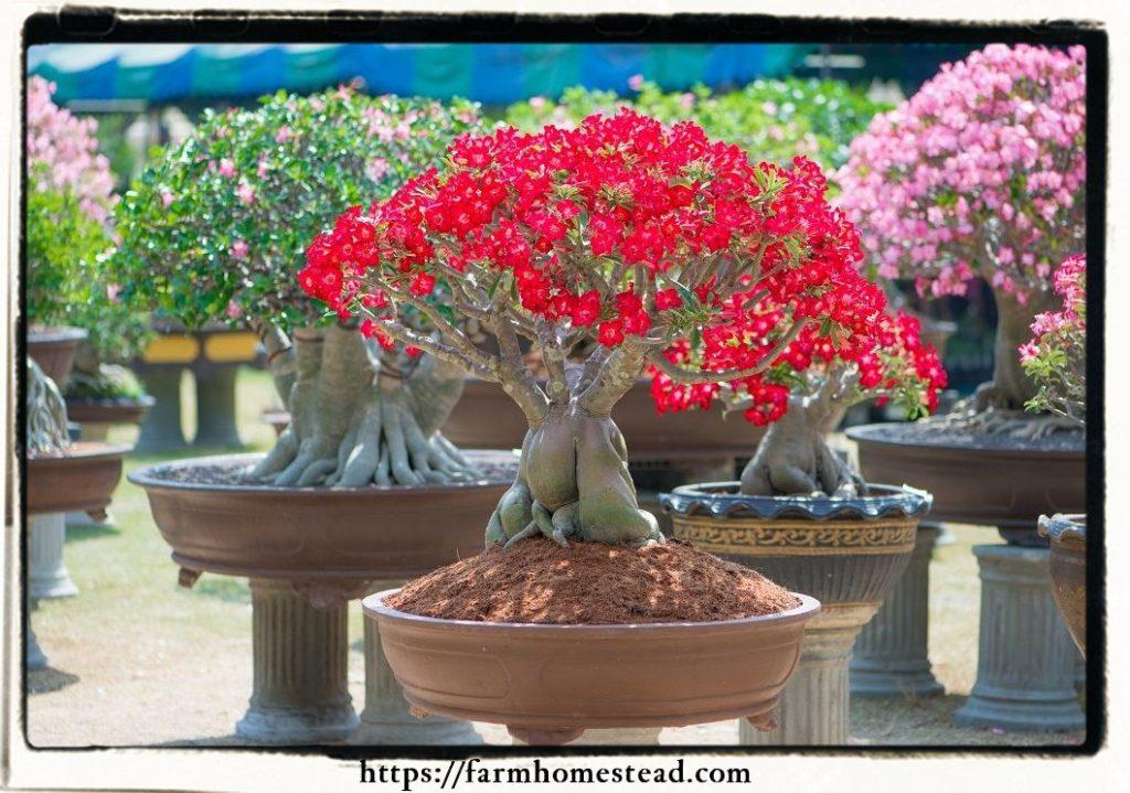 Bonsai Nursery