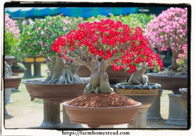 Growing a bonsai nursery – Explore the hobby?