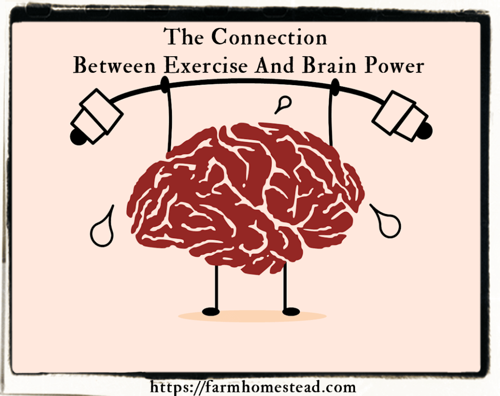 connection between exercise and brain power