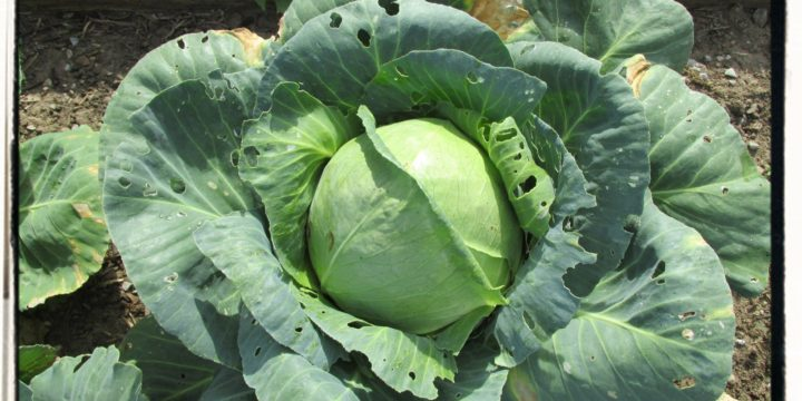 Right to Farm Equals No Right to Grow Food