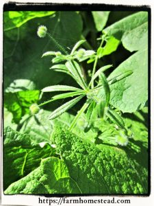 cleavers - up close