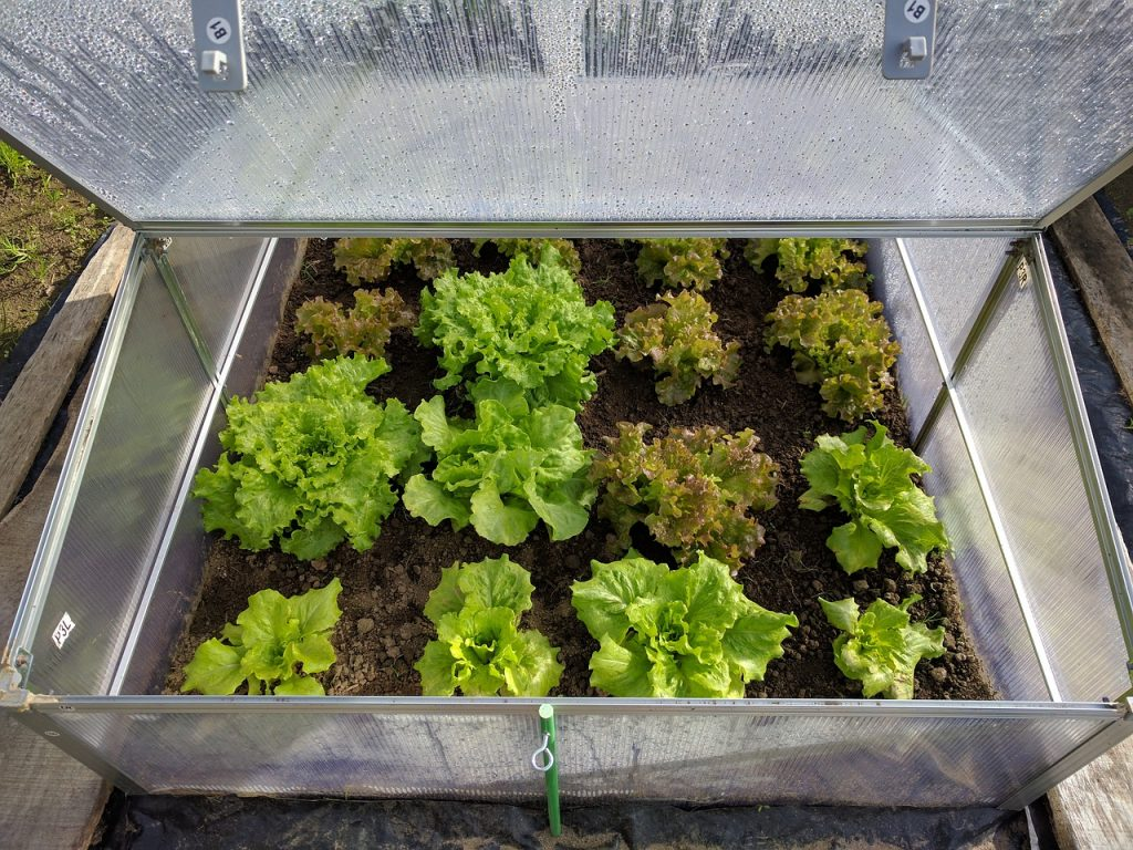 garden all year with a cold frame