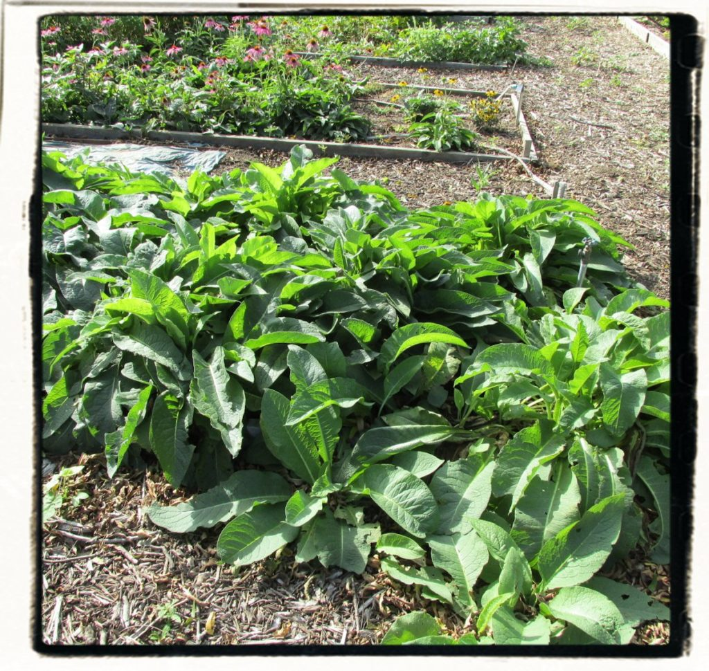 herbs grown chemical free at the FarmHomestead