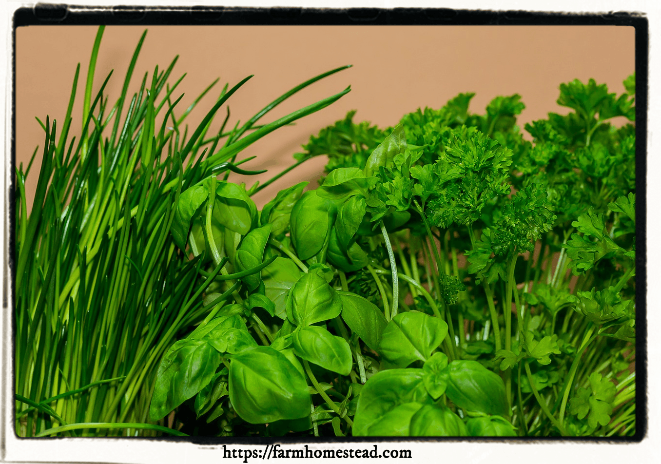 herbs to grow indoors for cooking