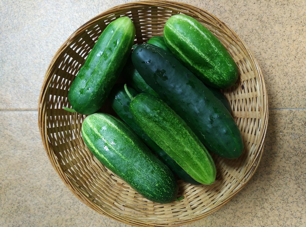 grow cucumbers in your organic garden