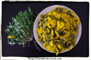 dandelion root and flower