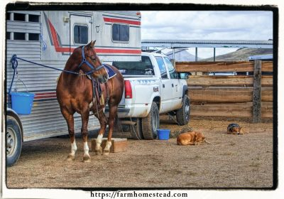 Choosing the Best Vehicle for Your Homestead: 3 Things Newbies Should Know