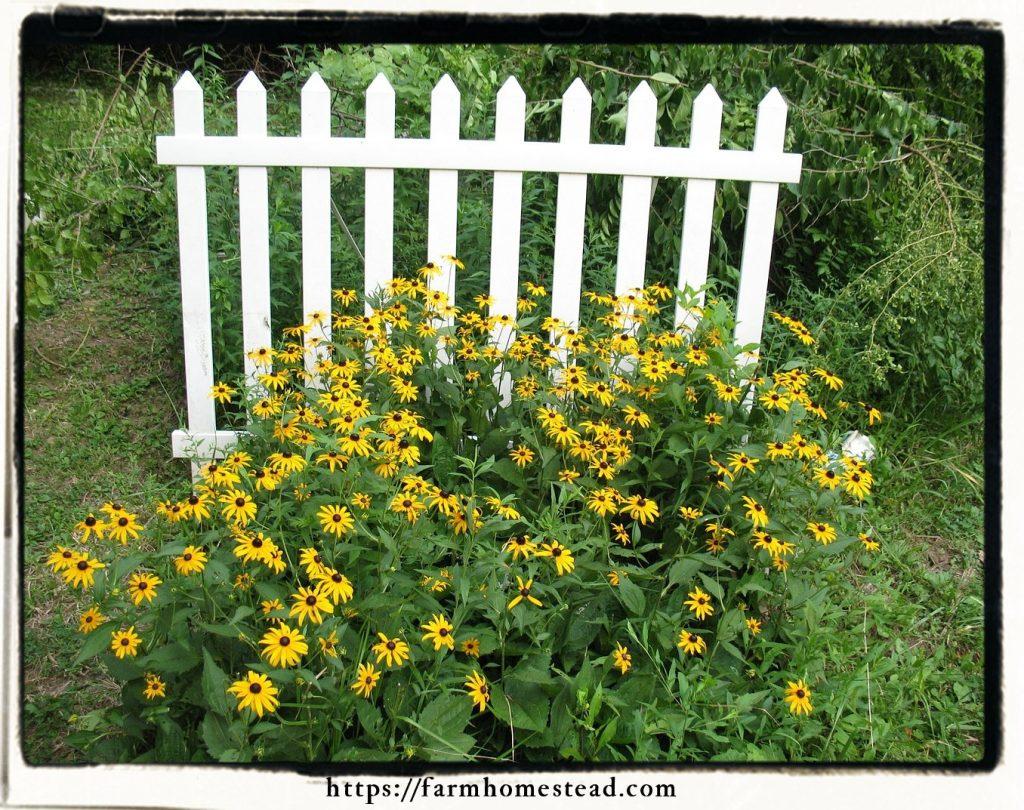 homestead garden design