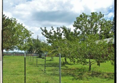 Adding Fruit To Edible Landscape