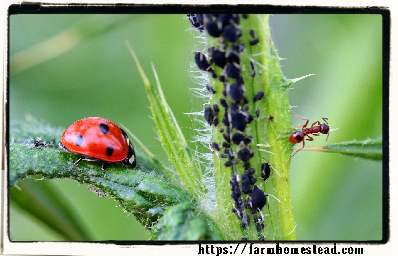 garden bug balance