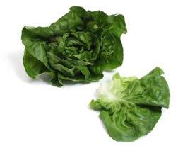 greens - bibb lettuce