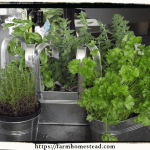 12 Herbs to Grow Indoors in the Winter