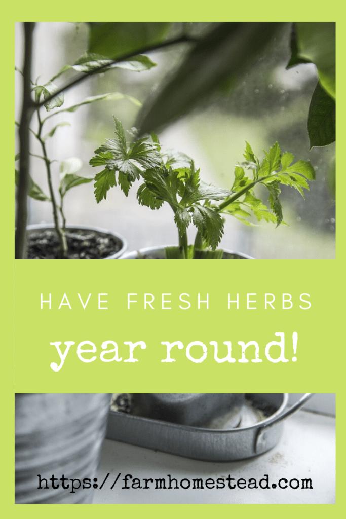herbs year round