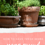 How to Have Fresh Herbs Year Round