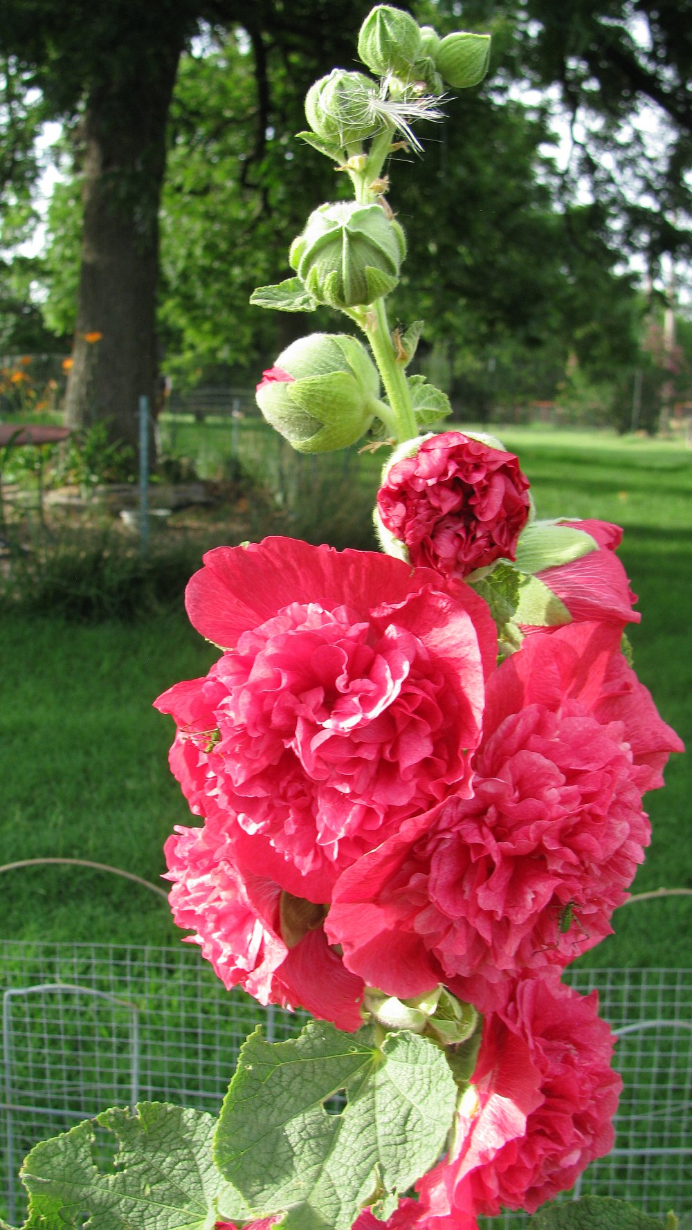 Peony evading tincture: soothe and cure 47
