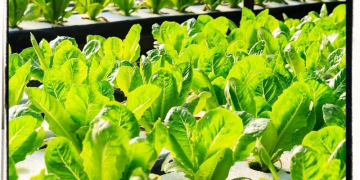 Know About Hydroponic Nutrients and Their Benefits