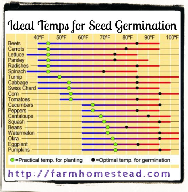 effect of temperature on germinating seeds Effects of temperature on cell respiration  germinating corn seeds (note: the seeds must be soaked as described below for 2 days before the laboratory session.