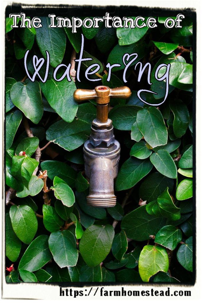 the importance of watering