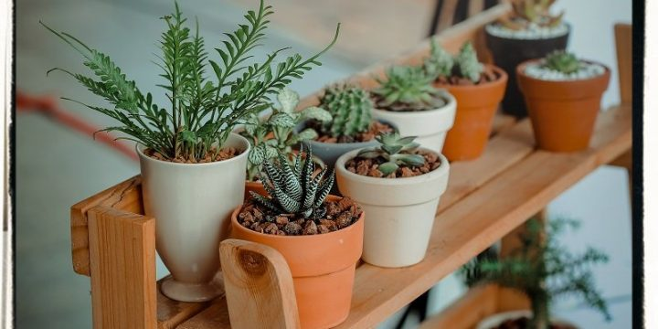 Why is Indoor Plant Nursery a Boon to Health?