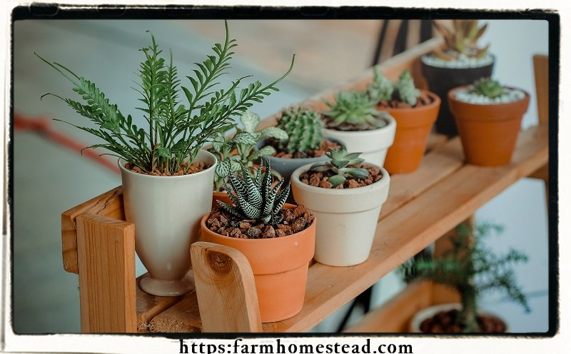 indoor plants are good for your health