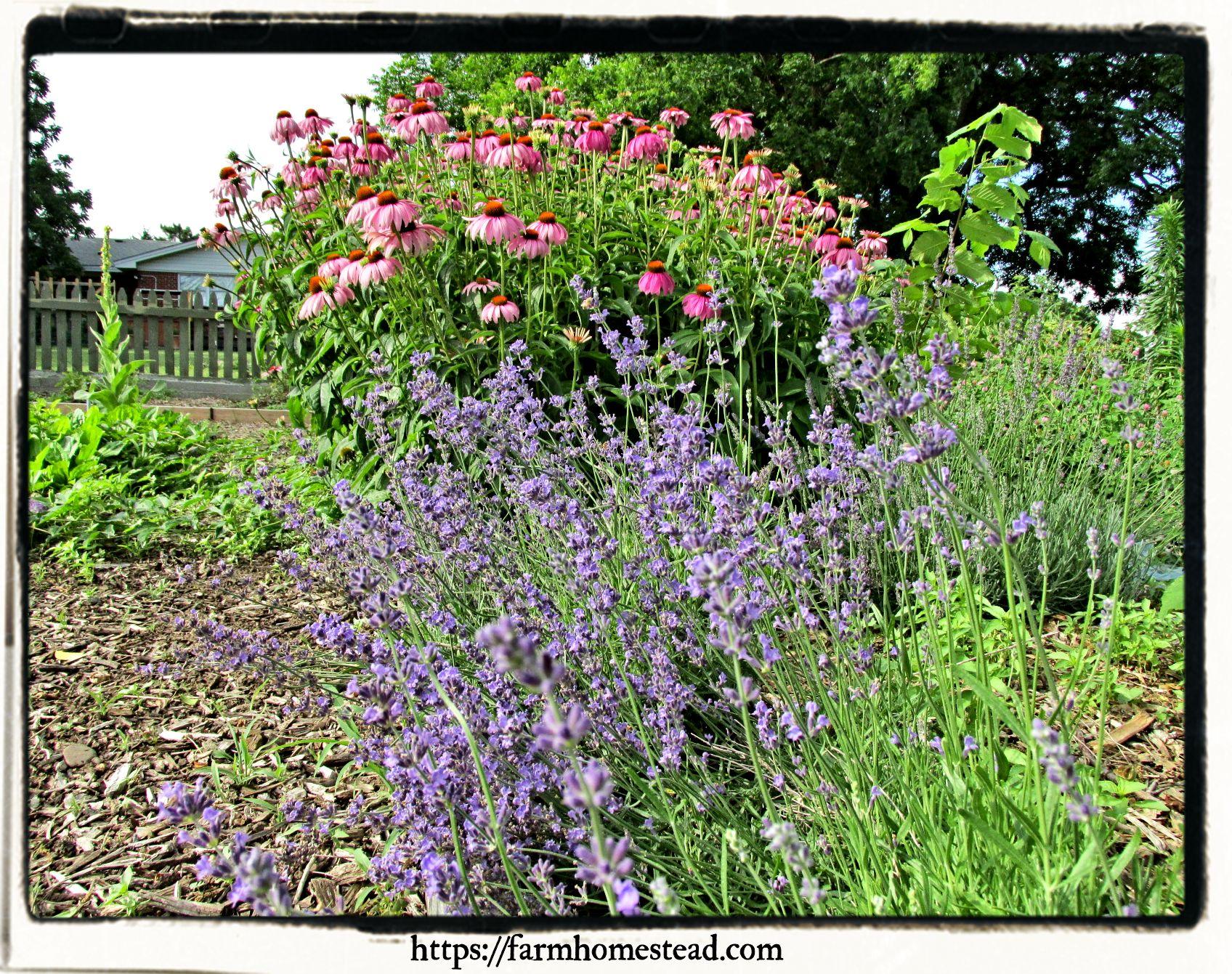 Beginner Tips for Starting an Herb Garden