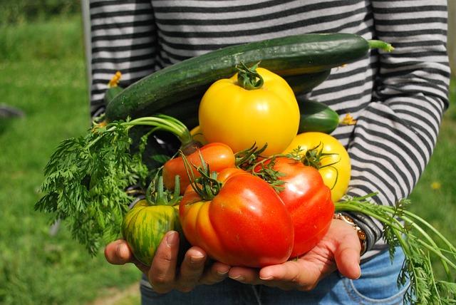 basics to start organic gardening