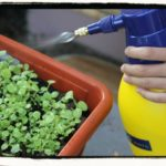Recipes for Organic Insecticide Spray