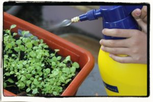 home-made insecticide spray