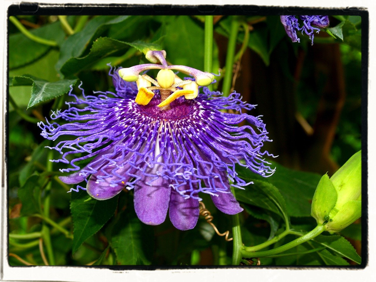 Passion Flower Farm Homestead