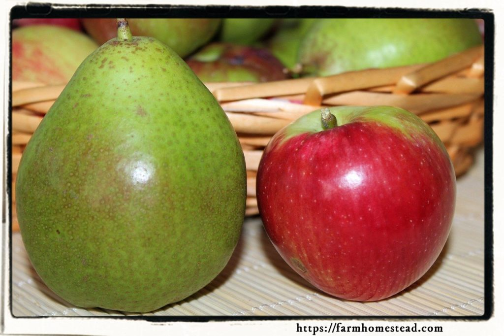 apples and pears - fall superfoods