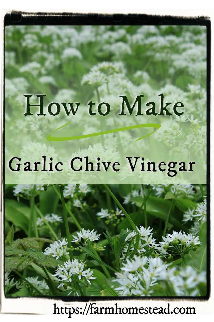 how to make chive vinegar