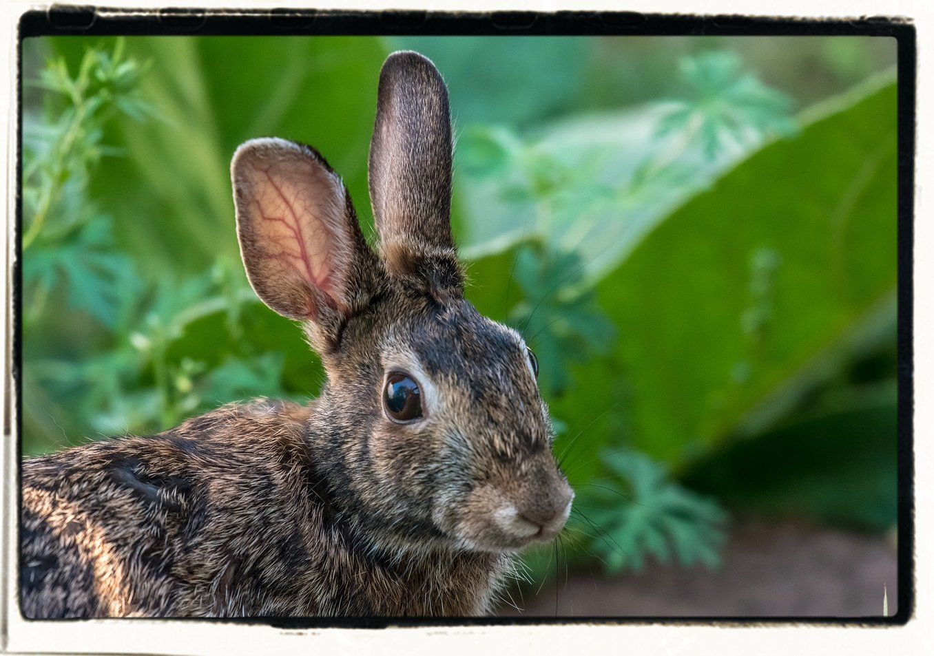 Stop rabbits from eating your garden farm homestead - How to deter rabbits from garden ...