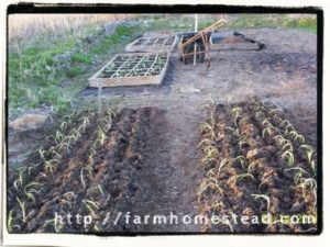 raised beds without borders