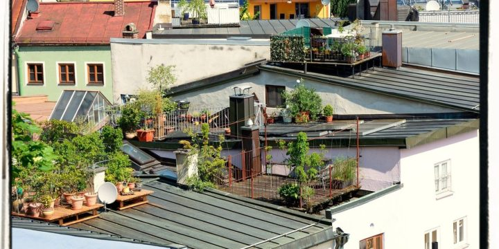 How to Build a Roof Garden
