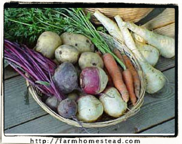 roots for root cellar