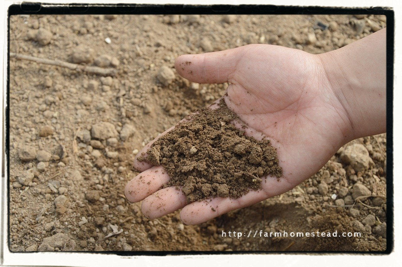 soil, dirt in hand